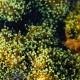 Balam Acab – See Birds EP