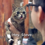 Lil' Bub Met Steve Albini (and all was right with the world)